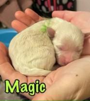 Magic-