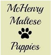 McHenry Maltese Puppies